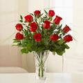 Amazing Roses, Israel, Bat Yam