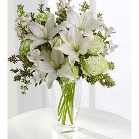 פרחים לבנים, Israel, Ness Ziona