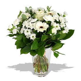 Envía Margaritas A Flores Milan Florerias Milan